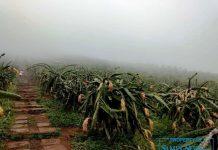 Keindahan obyek wisata Bukit Naga Jolong.