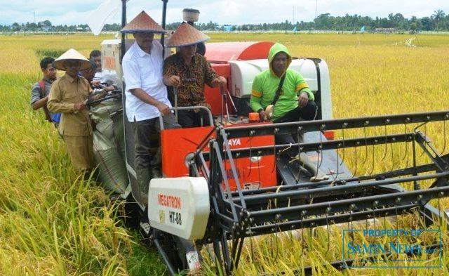 Ilustrasi : Mesin panen atau yang biasa disebut Combi yang sedang dioperasikan.