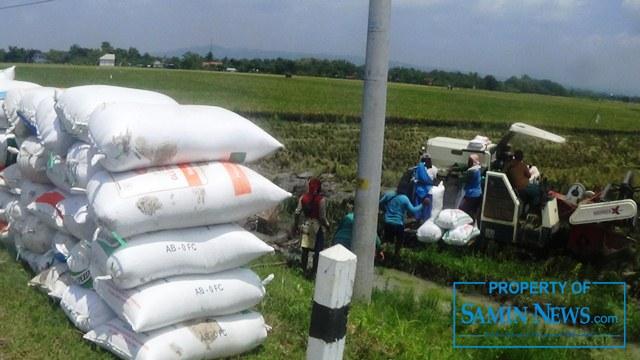 Puncak panen raya padi berlangsung di awal Maret 2021 dengan cuaca yang tidak terlalu ekstrem.(Foto:SN/aed)